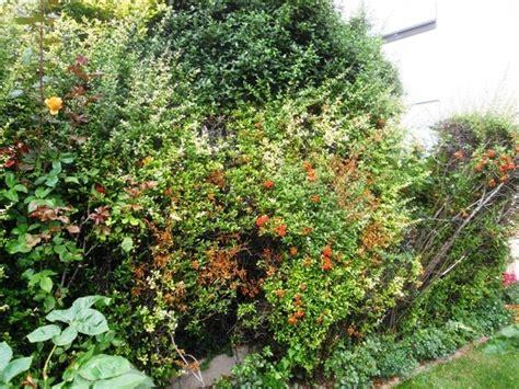 Welche Erde F R Tomaten 4981 by Welche Heckenpflanze Ist Am Besten Welche Apfelsorte Ist