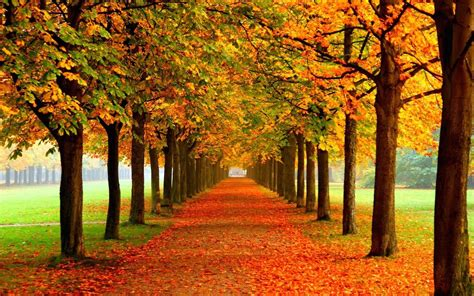 google images of fall autumn live wallpapers android apps op google play