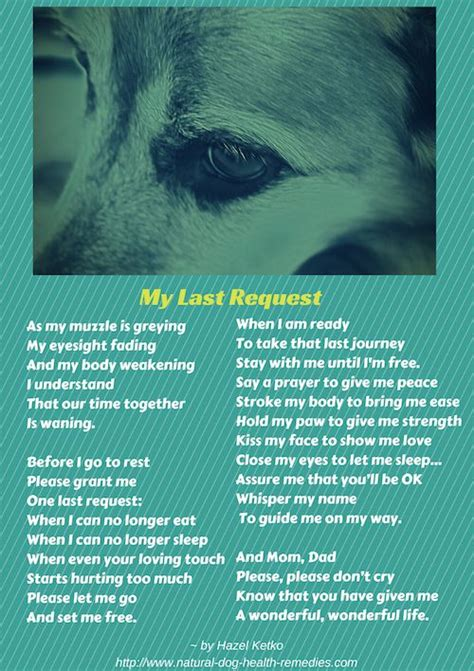 do dogs when they are dying dying poem search baby boy to say goodbye boys and my last