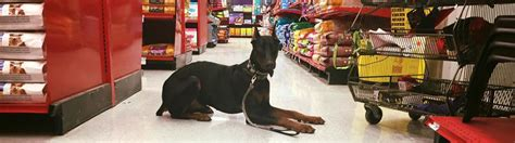 puppies fort wayne friendly stores flying colors canine academy