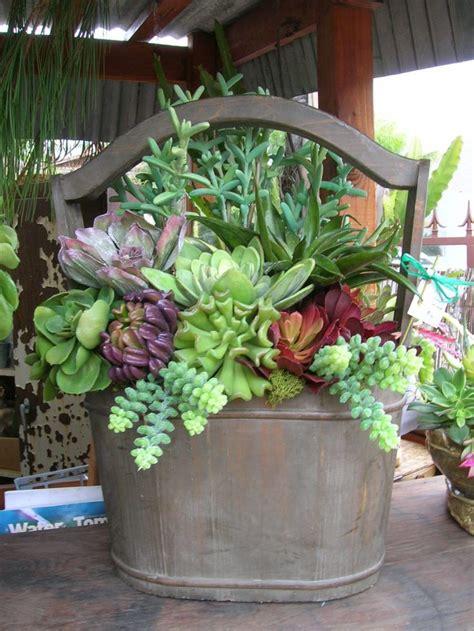 succulent arrangements outdoor succulent arrangements www imgkid com the
