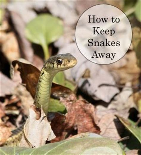 how to find snakes in your backyard keeping snakes out of your yard and garden gardens