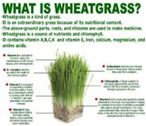 Wheatgrass Detox Diet Plan by 1000 Images About Wheatgrass On Wheat Grass