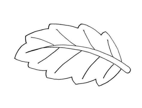 simple leaf coloring page leaves free coloring pages