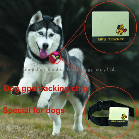 gps chip for dogs gps chip lookup beforebuying