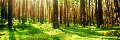 Forest L by Earth Forest Cover Background Twitrcovers