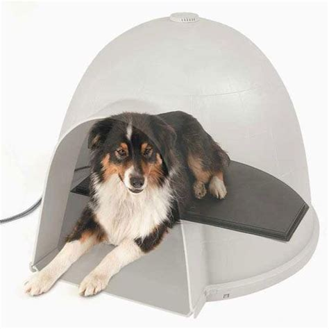 medium igloo dog house border collie mix in igloo house medium size dog breeds just rig