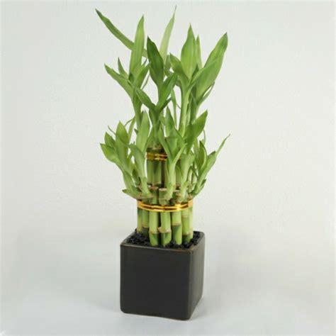 wohnideen pflanzen feng shui pflanzen 220 ber die schutz und komfortfunktion