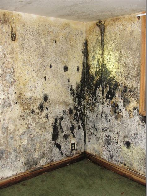 buying a house with mold in basement the best of the worst home inspection photos of 2013