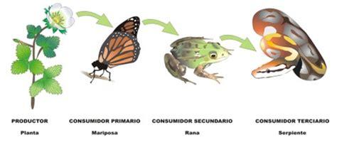 cadenas troficas terrestres ejemplos 191 qu 233 es una red tr 243 fica y una cadena alimenticia lifeder