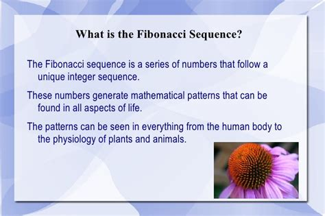 patterns in nature biology powerpoint fibonacci sequence