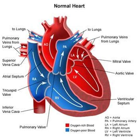 Kaos Note Note 18 Bv cardiovascular system at lakeshore technical college