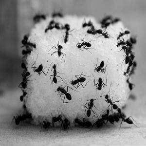 como eliminar cucarachas de la cocina c 243 mo eliminar hormigas de la cocina remedio muy f 193 cil