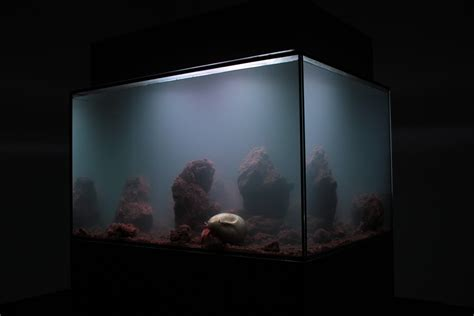 Very Beautiful In French creative aquarium aquarium architecture and pierre huyghe