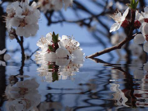 immagini animate di fiori fiori 175 184 ƹ ӝ ʒ 164 184 180 175 morena