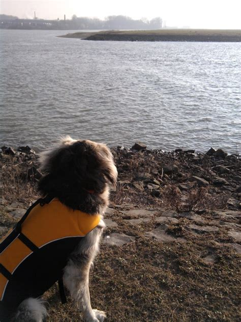 zwemvest huren zweemvest reddingsvest hondenforum