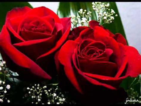 imagenes de rosas para mi novia 12 rosas para mi novia youtube