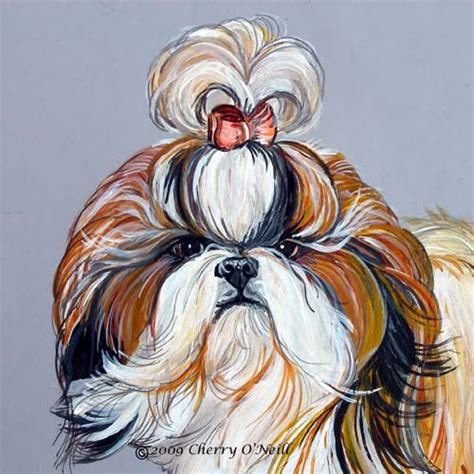elite shih tzu 1000 images about shih tzu on teddy puppies bad hair day and