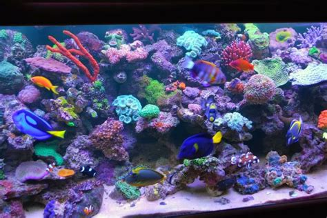 aquascape reef tank aquascapes 135 reef aquarium reef2reef saltwater and