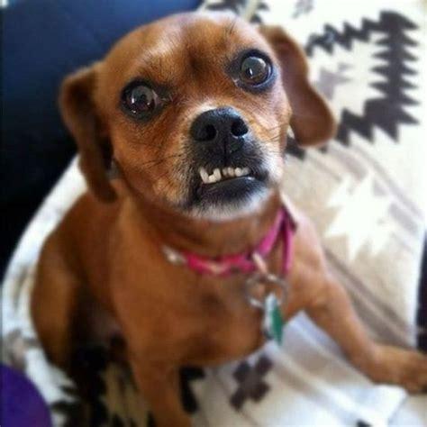 dogs  underbites barnorama