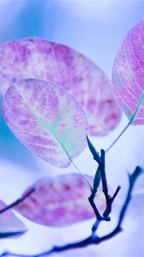 wallpaper iphone 5 hd purple iphone 5 wallpapers hd cute purple leaves iphone 5