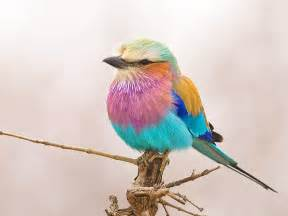colorful birds 41 best birds beautiful wings colorful birds images on