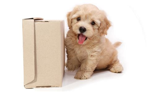cute dog wallpapers for android desktop wallpaper box cute puppy hd wallpaper free download hd wallpapers dogs