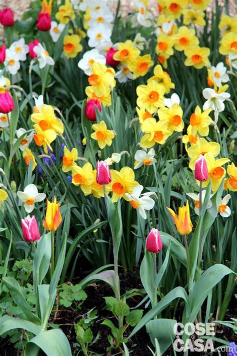 fiori bulbi primaverili bulbi primaverili quattro modi originali di piantarli