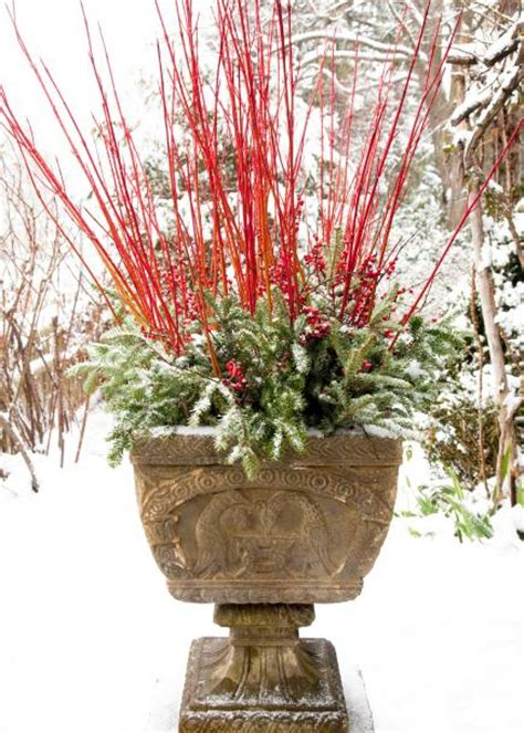 outdoor winter planter ideas winter container gardens