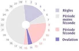 Calendrier De Fertilite Chez La Femme Cycle Menstruel Cycle Endometrial Cycle Menstrual