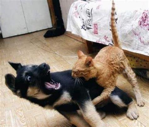 agosto « 2010 « gatos graciosos