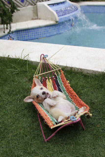 puppy hammock best 25 hammock ideas on cover for car car hammock and