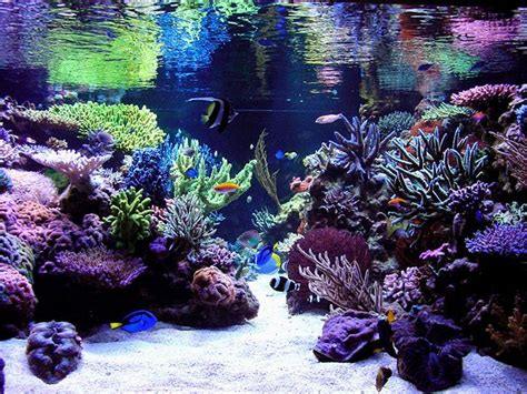 Saltwater Aquarium Aquascape by Reef Aquarium Aquascape Designs Reef Aquascaping Designs
