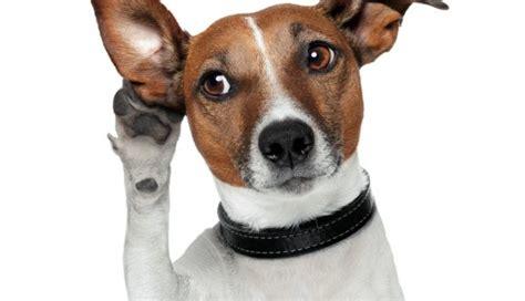 legge sull ingresso dei cani nei luoghi pubblici l avvocato io non posso entrare mixer planet