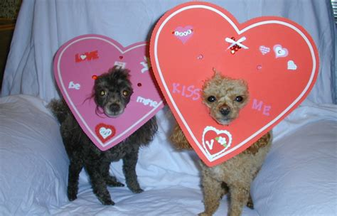 pet valentines top 10 not so surprising facts about s day