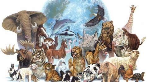 fotos animales juntos el d 237 a mundial de los animales se celebra hoy en todo el