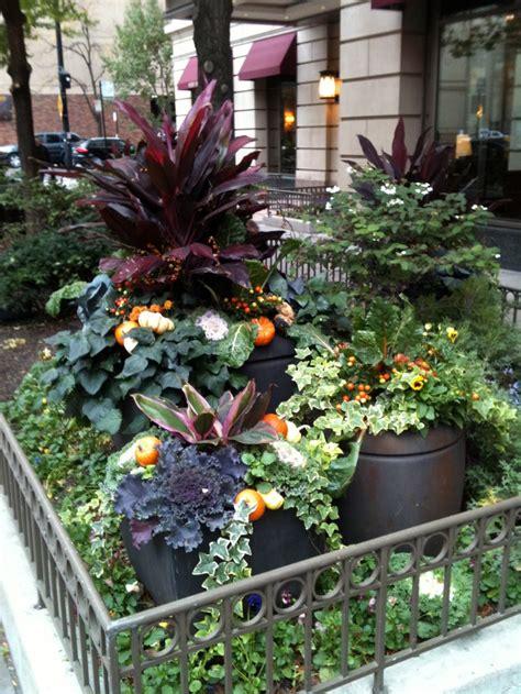 container gardening   city  chicago gardens