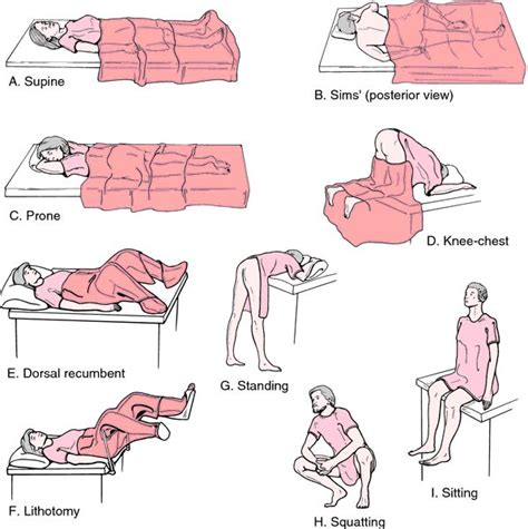recline meaning in hindi dorsal recumbent position definition of dorsal recumbent
