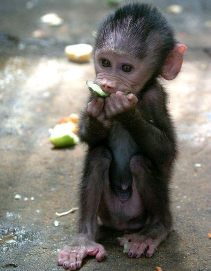 google images monkey name this primate baby google images animal and monkey