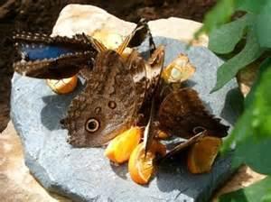 jardin des papillons grevenmacher 2017 ce qu il faut