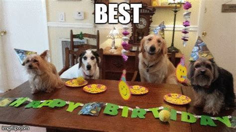 happy birthday puppy gif puppies for your birthday breeds picture