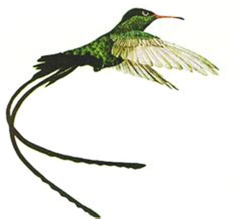 jamaican hummingbird tattoo expression pinterest 1000 images about hummingbird tattoos on pinterest bird