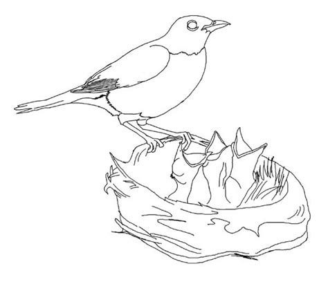 red robin coloring page red robin coloring sheets coloring pages