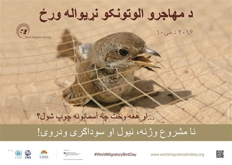 materials wmbd 2016 archive world migratory bird day