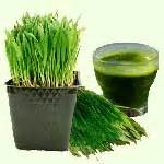 Wheatgrass Detox Side Effects by Top 10 Wheatgrass Benefits