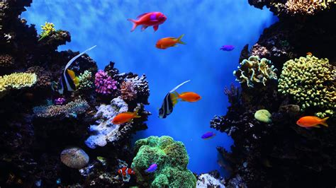 ultra hd fish wallpapers top   ultra hd fish