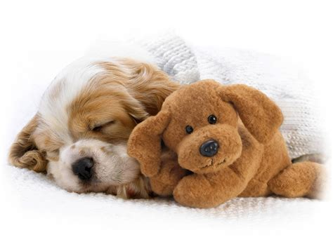 cute pictures of puppies 1 wallpapers and pictures of cute puppies nice wallpapers