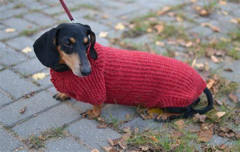 dachshund sweater for sweater for dachshund sweater vest