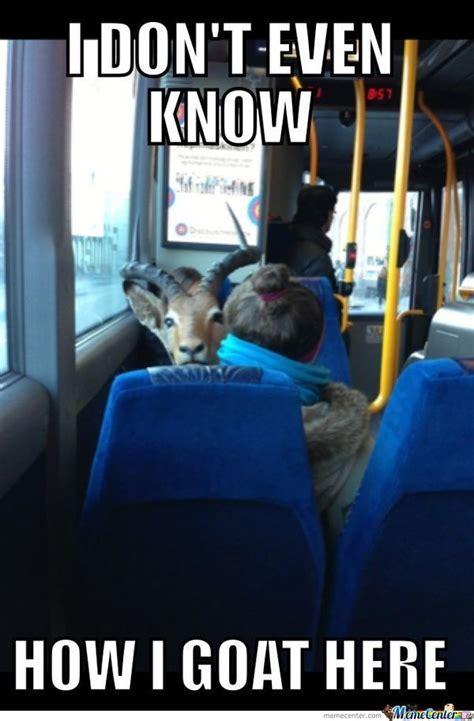 funny goat meme   images