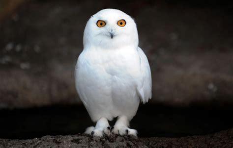 7 weird looking birds that can make you flinch